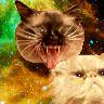 z___z's avatar