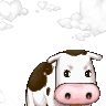 a real cow's avatar