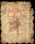 temaraire's avatar