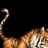 Vampire Homoerotica's avatar